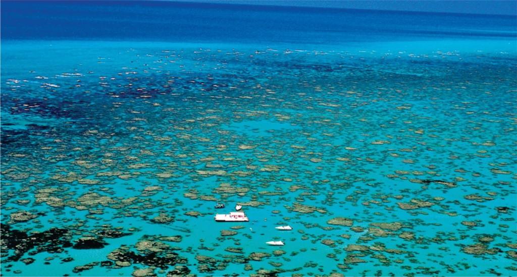 Maracajau snorkel tour