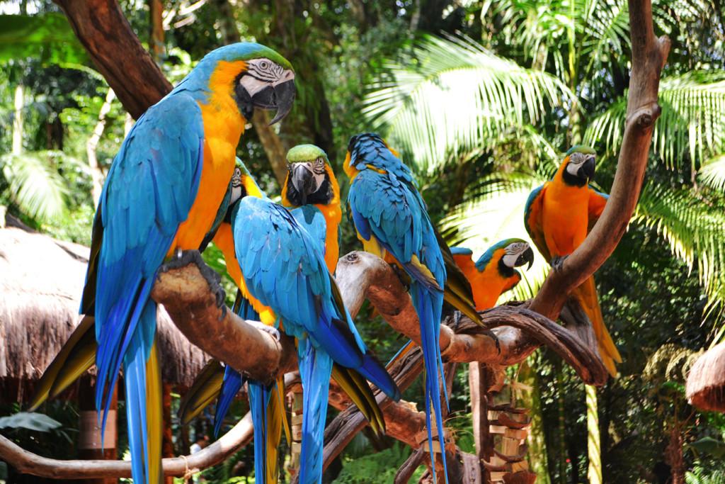 birdpark tour